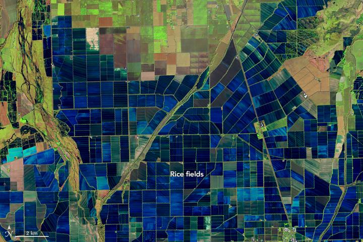 blue satellite image of fields