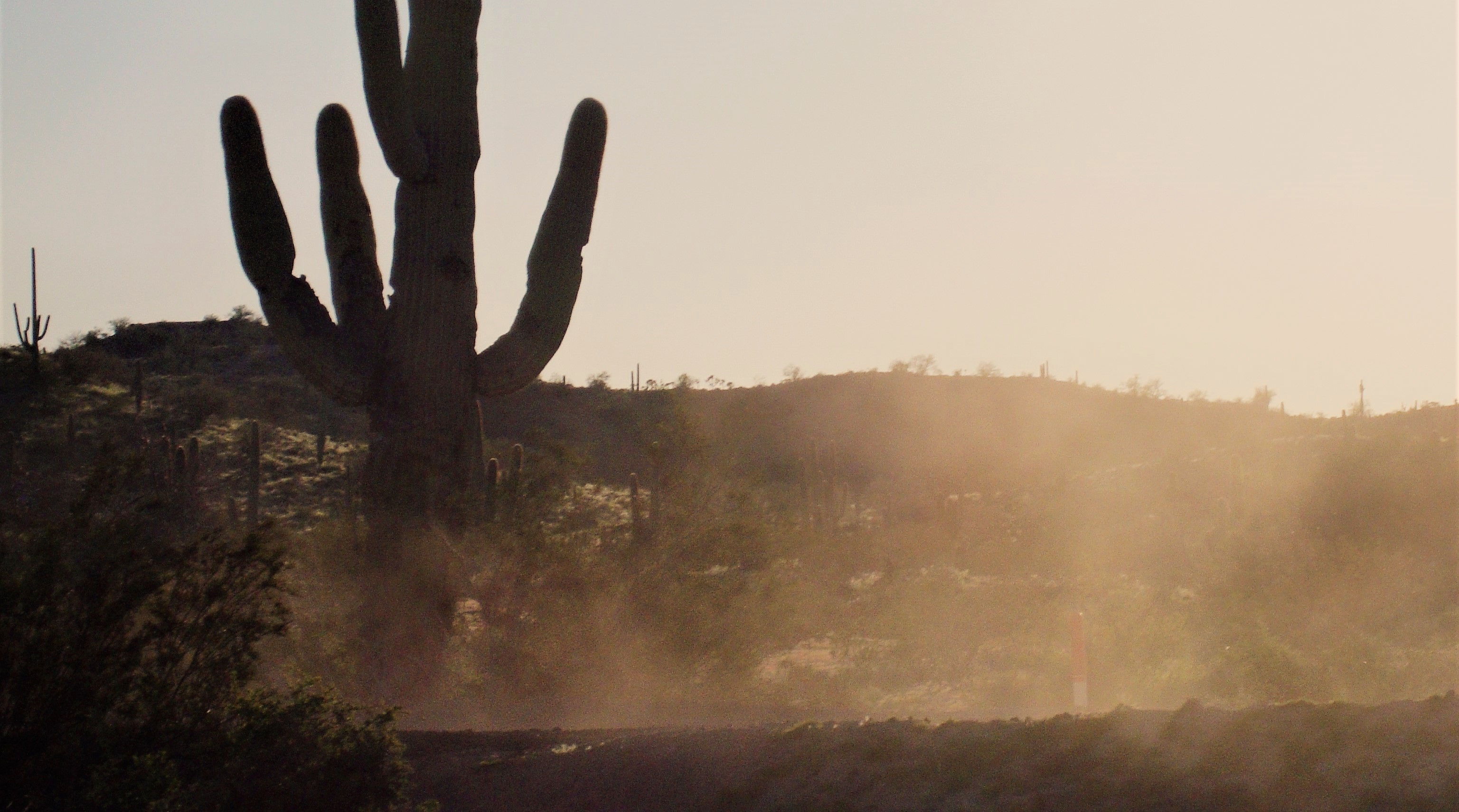 hazy air around a cactus