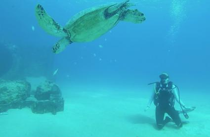 photo of scuba diver with turtle in Hawaii