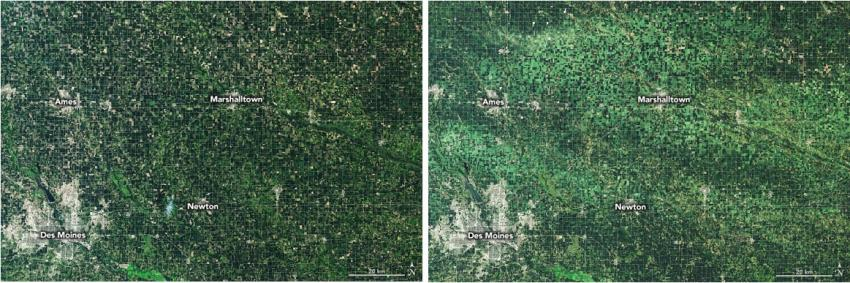 These images from Landsat 8 capture the devastating effects of a derecho on Iowa's agricultural industry. The first image, taken July 10, 2020, shows the area before the storm, while the second image, taken Aug. 11, 2020, shows the region after the derecho. Wind-damages crop areas appear light green. Credits: NASA, Joshua Stevens