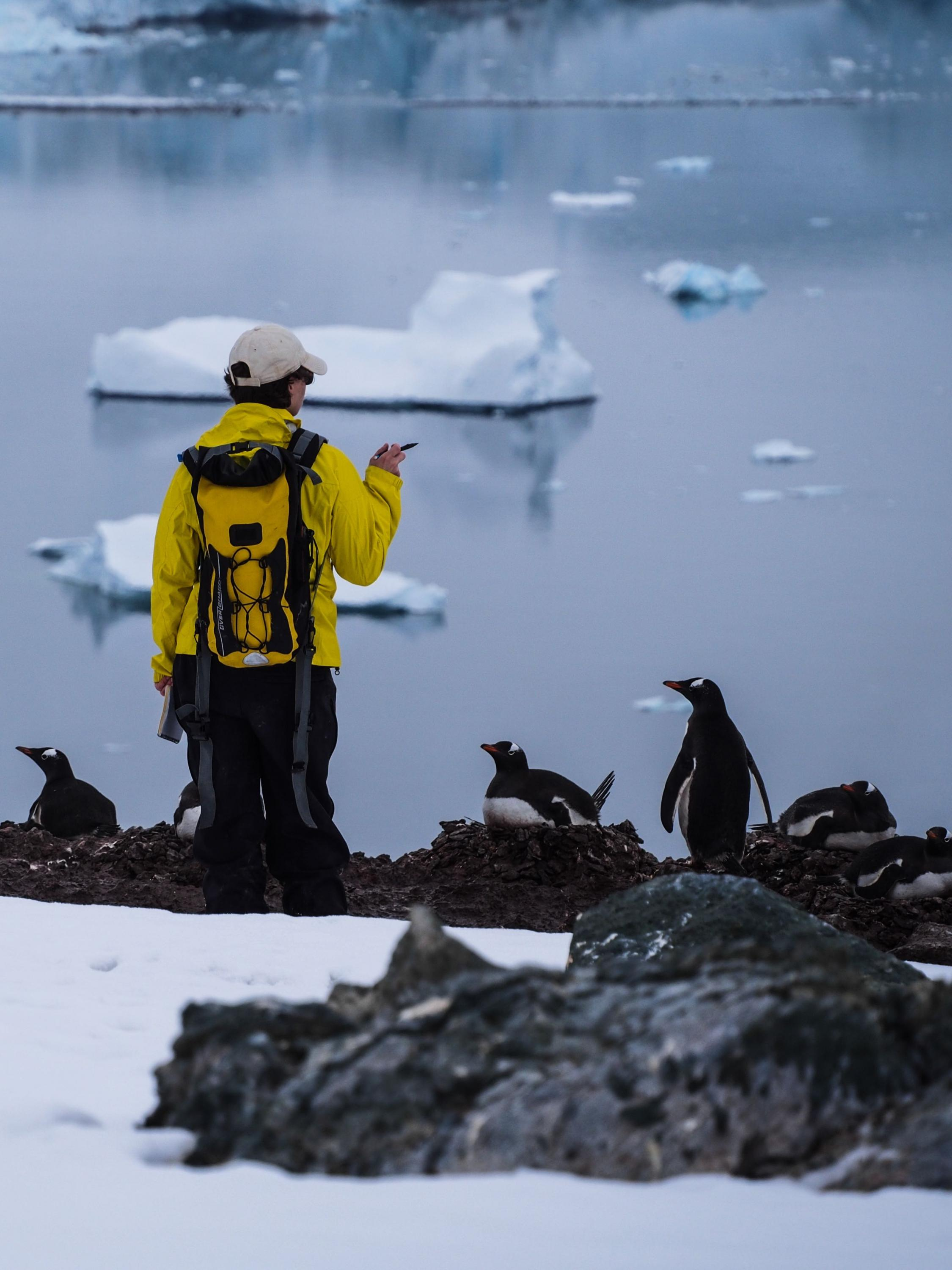 Lynch counting Gentoo Penguins