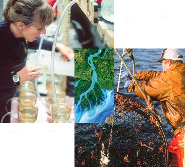 Three images stitched together of woman in lab, estuary, and man fishing