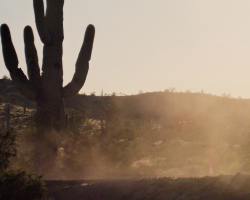 dust swirling around a cactus in a desert